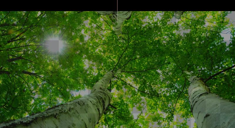 樹木・庭診断