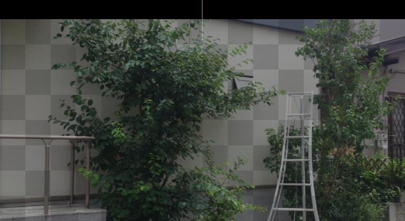 庭木のメンテナンス