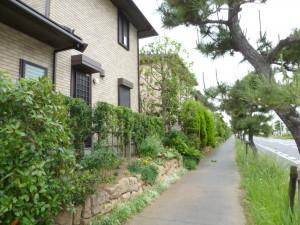 千葉県浦安市年間管理剪定工事