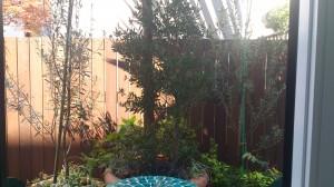 テラポット植栽
