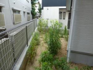 新築造園工事見積りP1010616