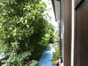 千葉県浦安市造園、剪定年間管理