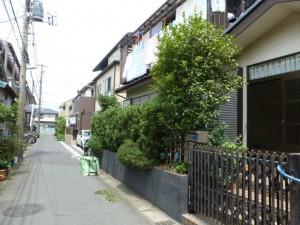 千葉県浦安市剪定年間管理