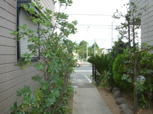 千葉県幕張町、剪定