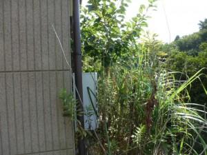 お庭が知らぬ間にジャングルに