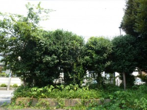 モジャモジャな木